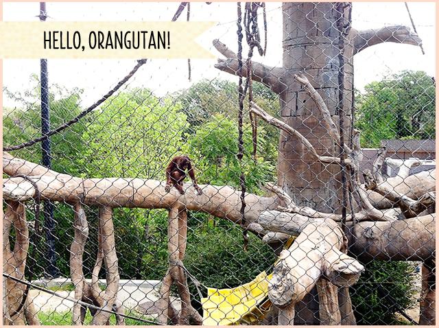 Omaha Zoo Orangutan