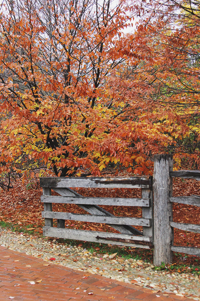 Autumn trees while visiting Mount Vernon on A Girl Named PJ