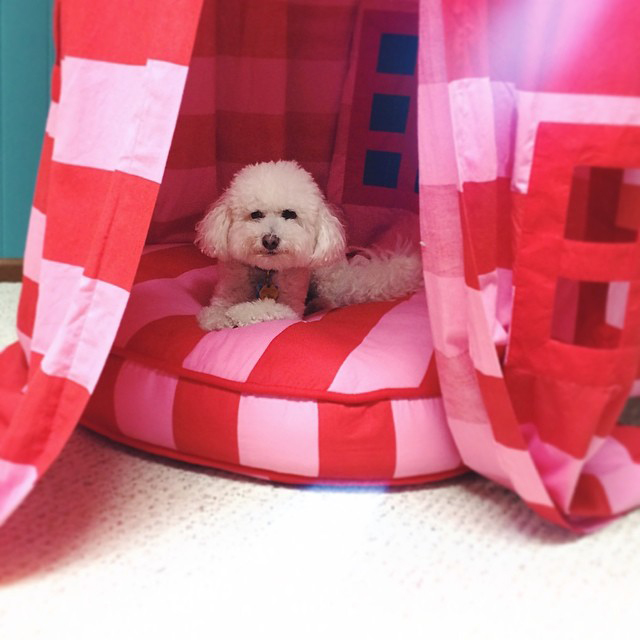 dog in play tent