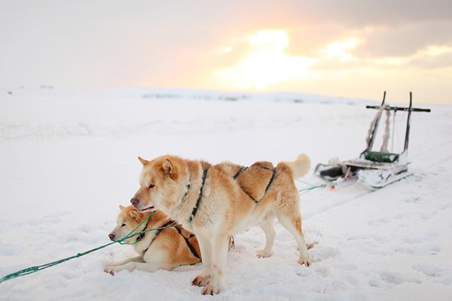 Dogsledding at Sunrise from Entouriste via bunnyanddolly.com