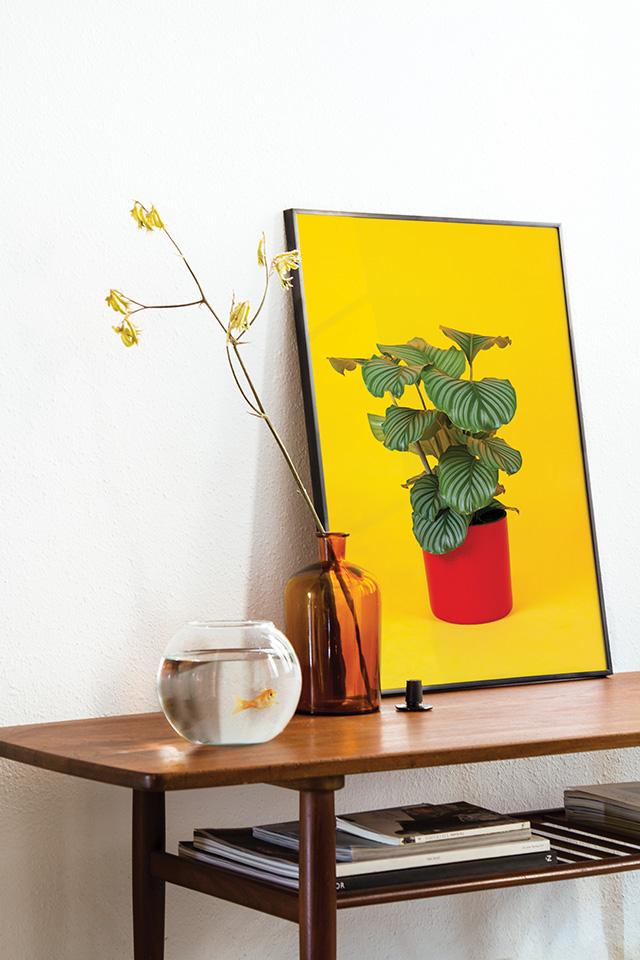 Flora Indoor Orbifolia print