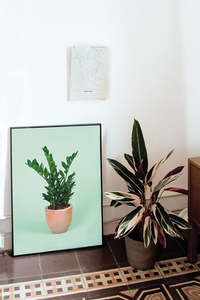 Flora Indoor Zanzibar print