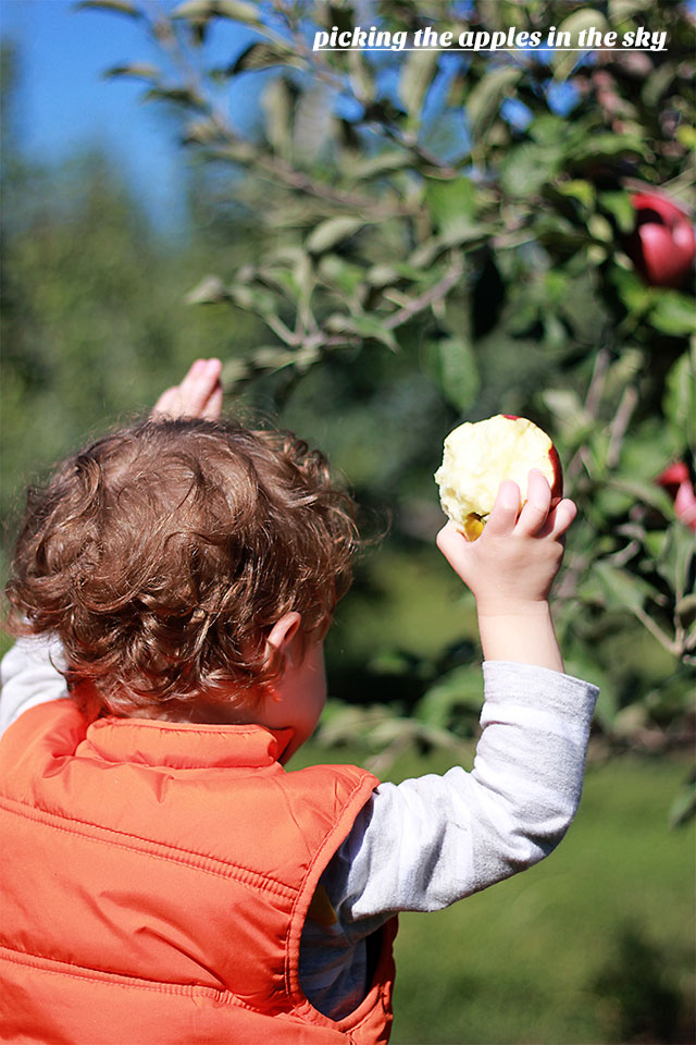apple picking with a toddler