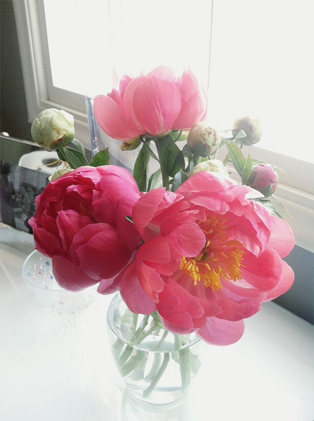 pink peonies | www.bunnyanddolly.com