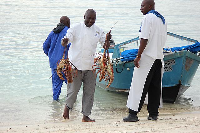 st. thomas lobster