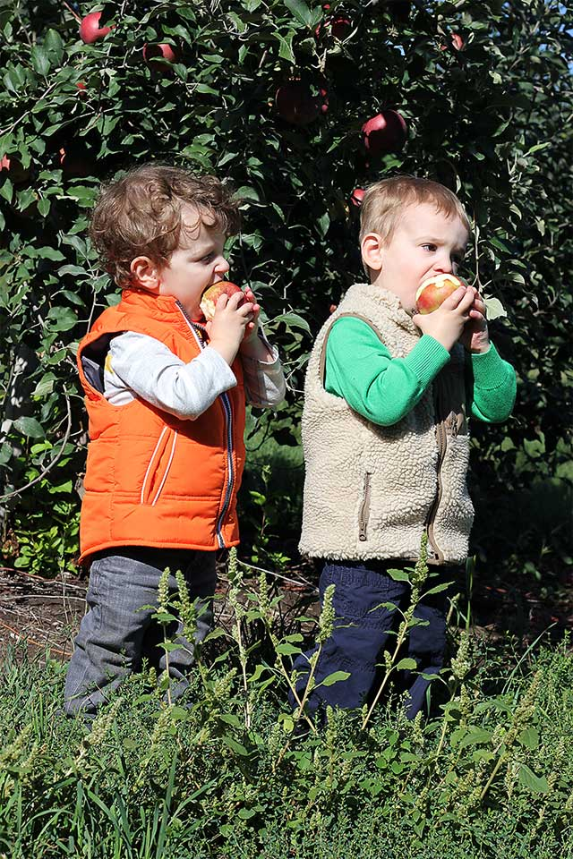 toddlers eating apples while apple picking